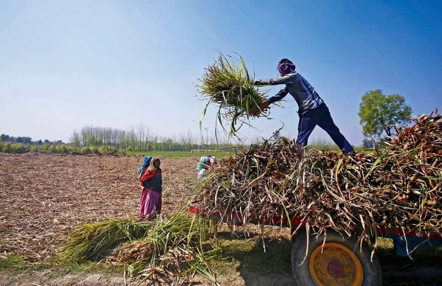 UP Farmers Face Brunt Of Data Gaps