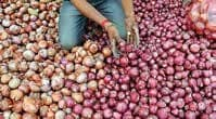 States Shun Imported Onions, Centre Worries Stock May Rot