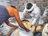 Cabinet Approves Distribution Of Free Foodgrains Till November