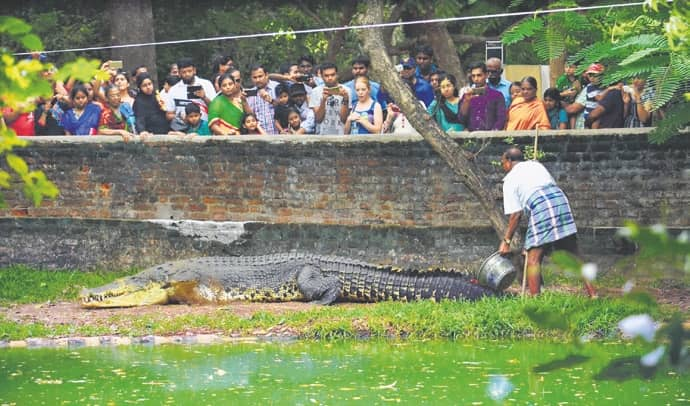 Did Jaws, India's Biggest Crocodile In Captivity, Die Of Stress?