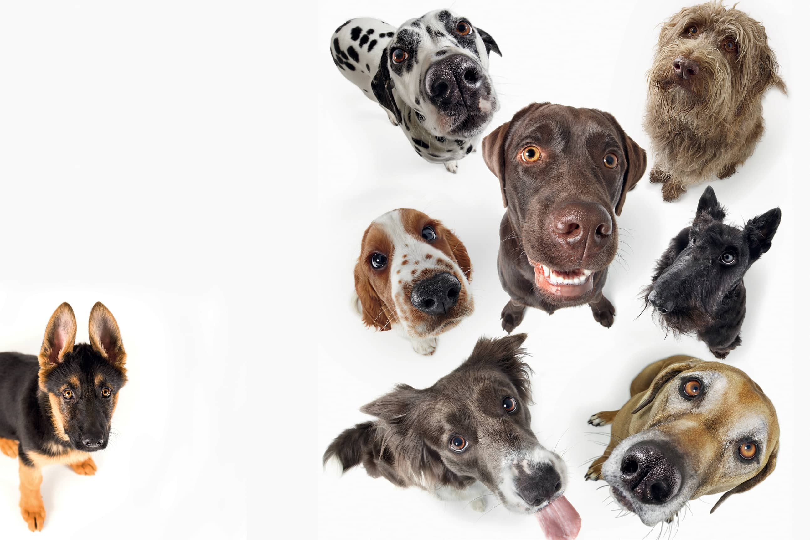 How Dogs Can Help Us Live Longer Healthier Lives