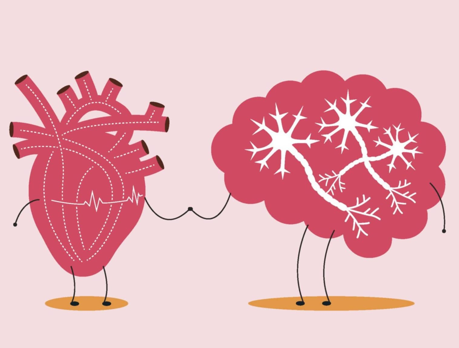 The Science Of Our Heart-Brain Connection