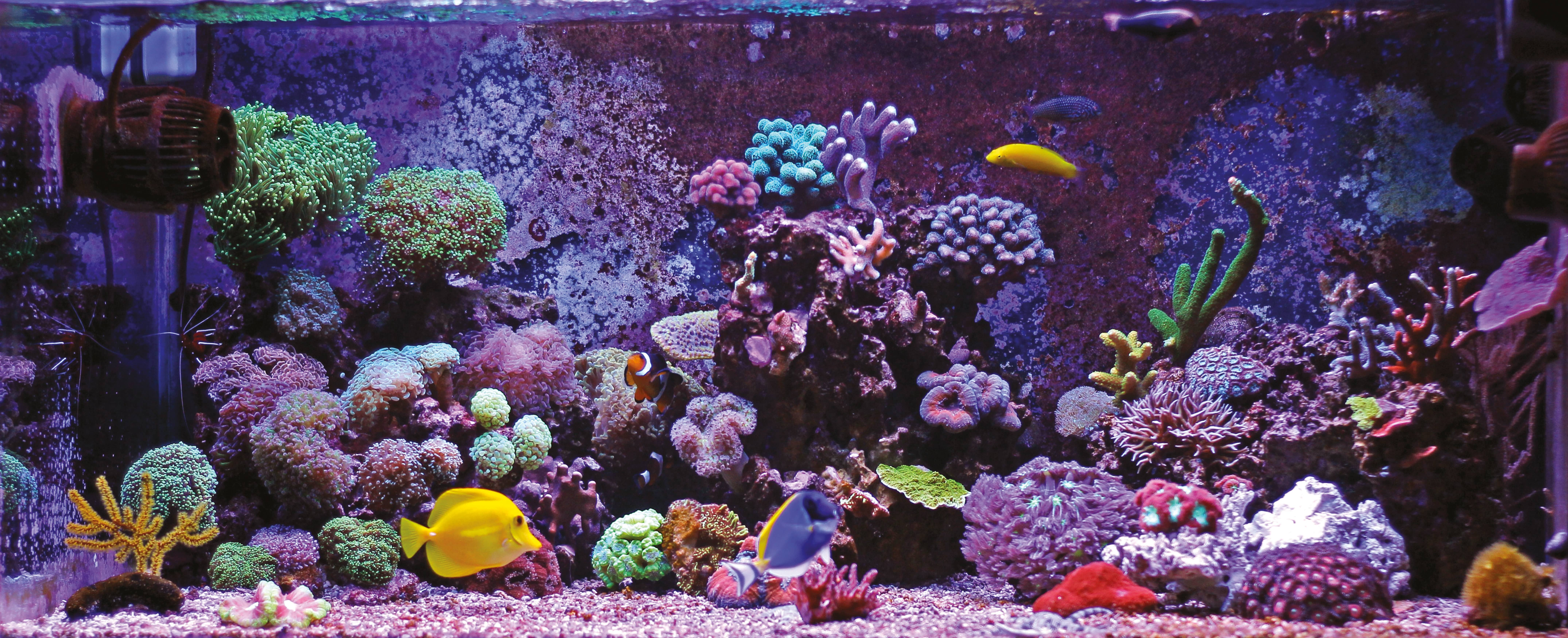 17 Tips For A Healthy Fish Tank