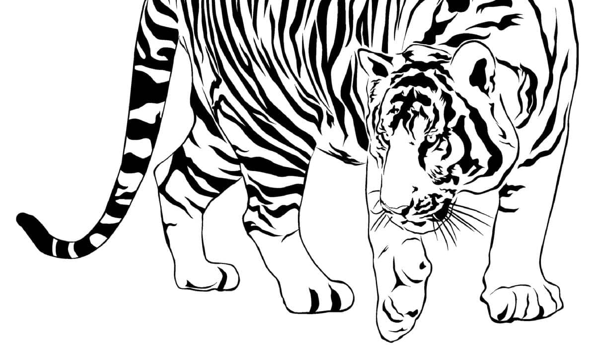 TIGER By The Tail