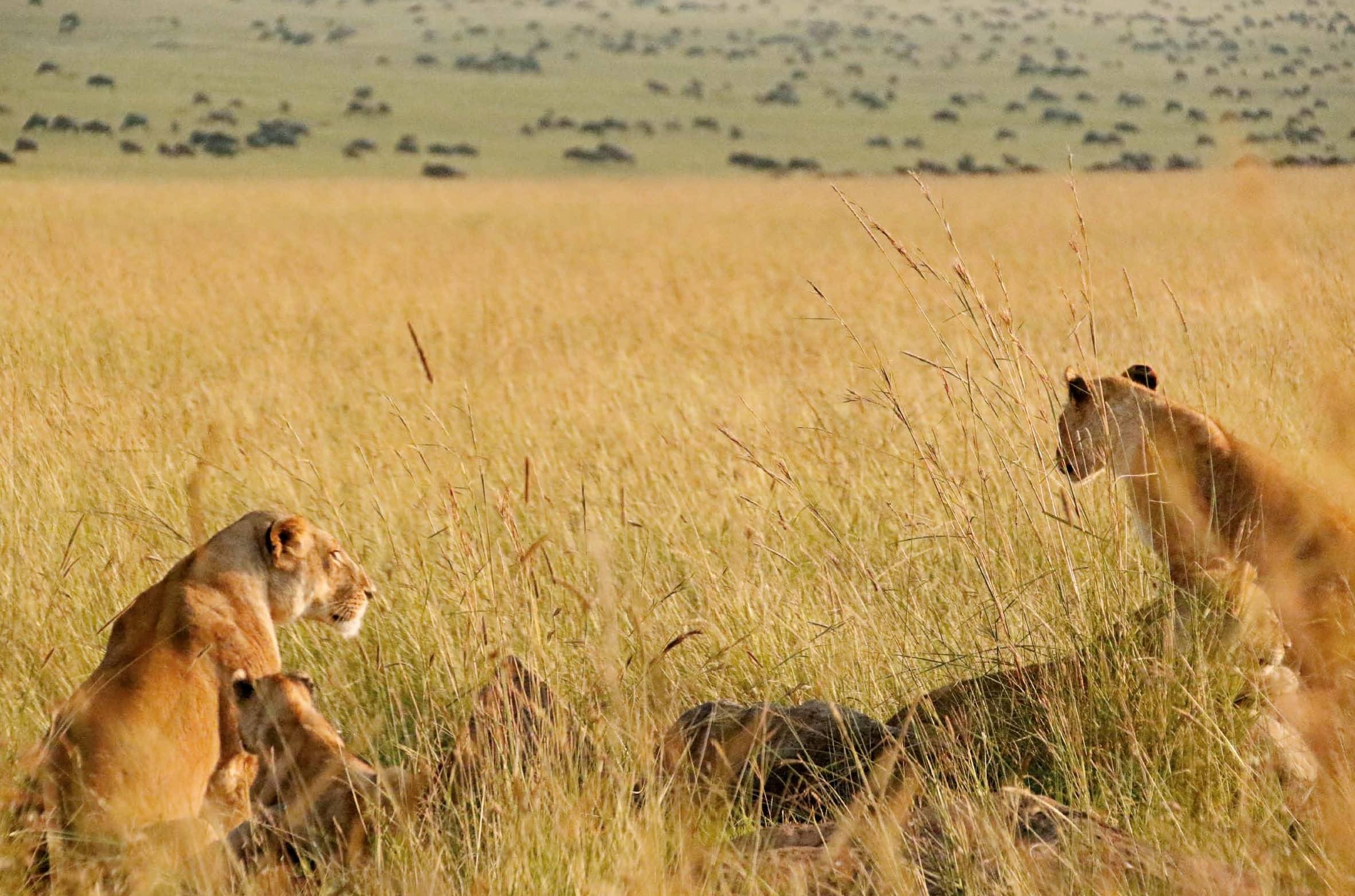 Hakuna Matata, It's Kenya!