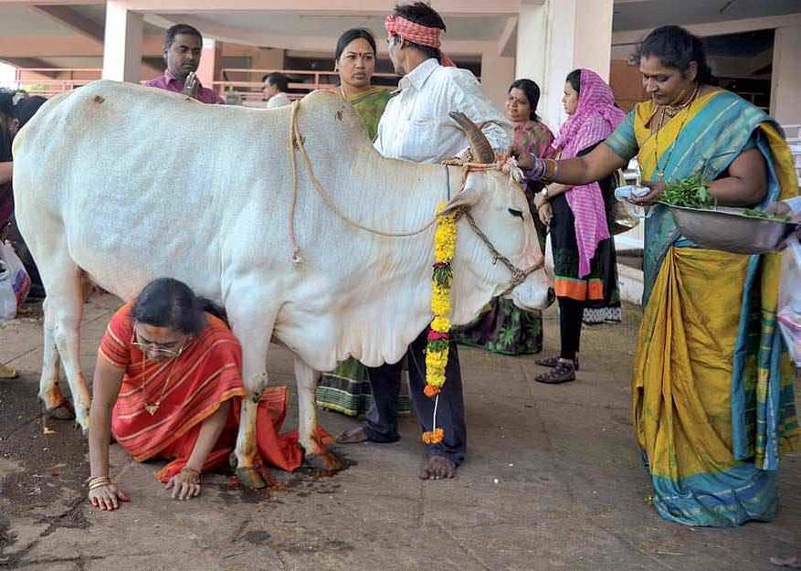 Sacred Cow & Profane Politics