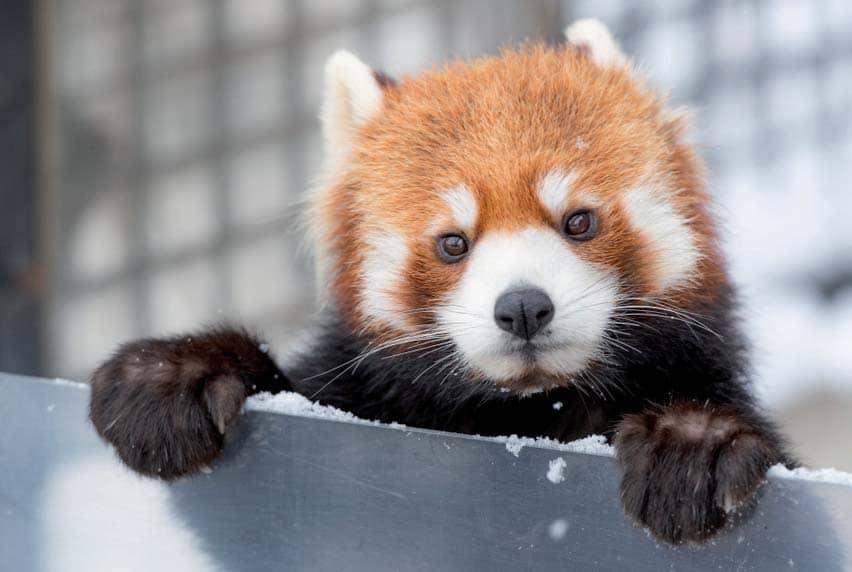 Zoo ilógicos: La agonía