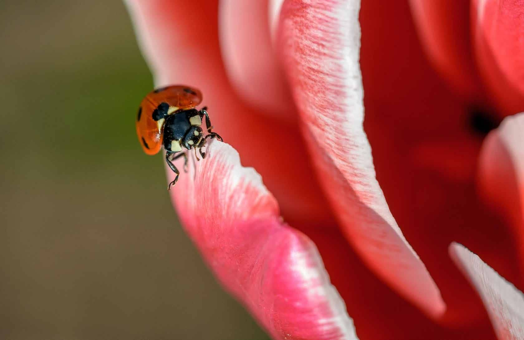 Guide to Macro Photography