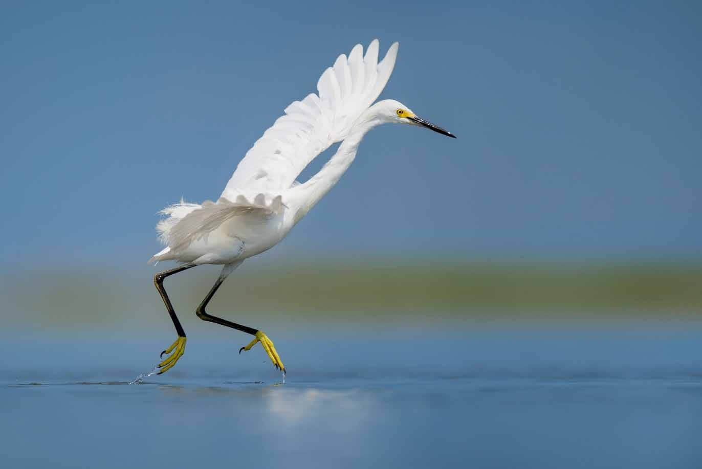 How To Get That Perfect Bird Image?