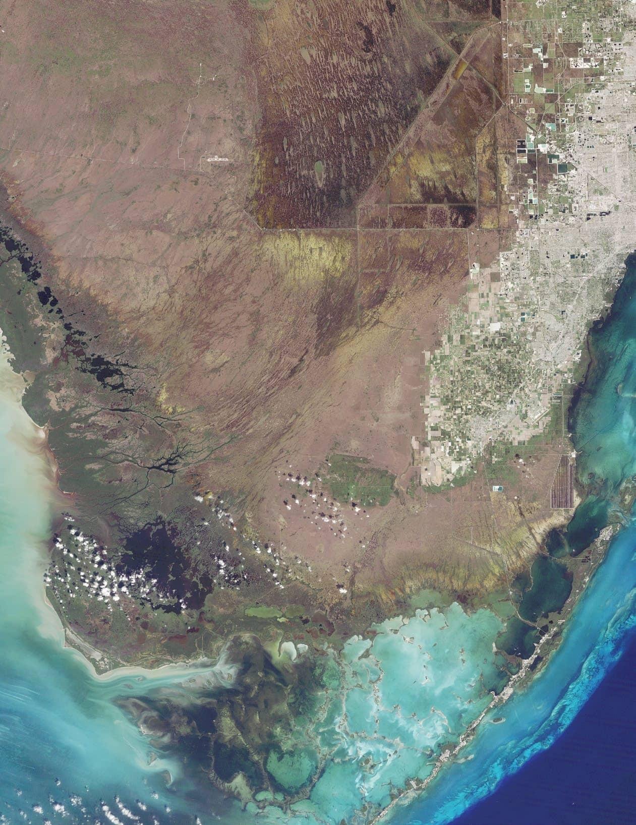 Everglades Enlivened