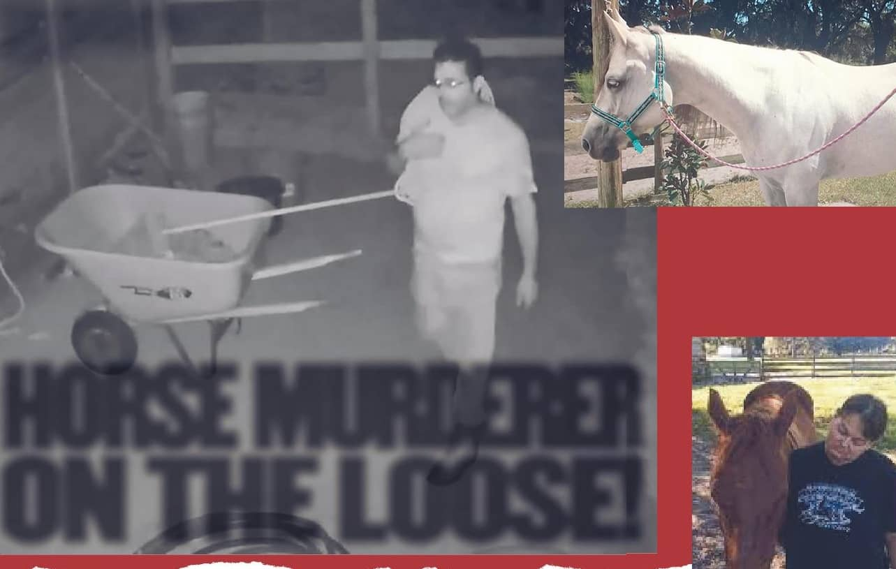 HORSE MURDERER ON THE LOOSE!