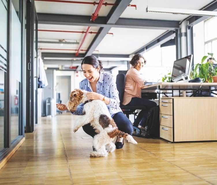 Why Work Is Better With Pets