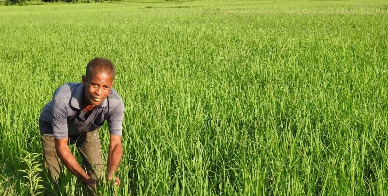 Submergence Tolerant: Assam
