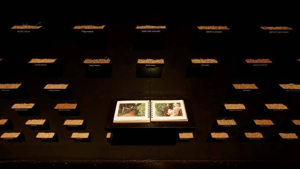 Amar Kanwar: The Lightning Testimonies And The Sovereign Forest