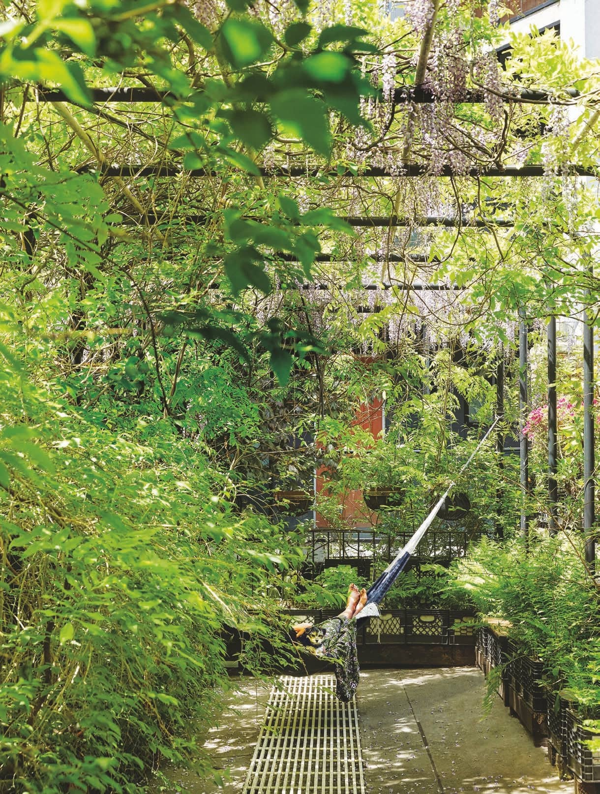 A Leafy Backyard Compound in Clinton Hill
