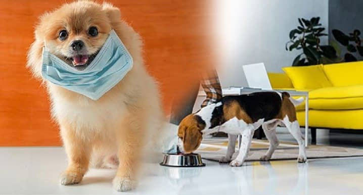 Covid and Pet Care