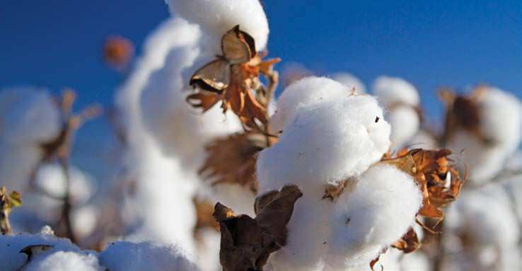 Cotton And Mohair Sectors To Promote Local Consumption