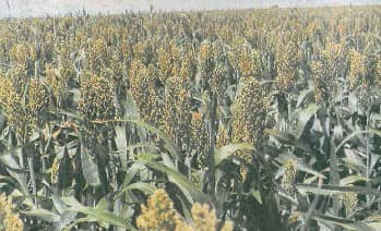 Plan Crops With Facts
