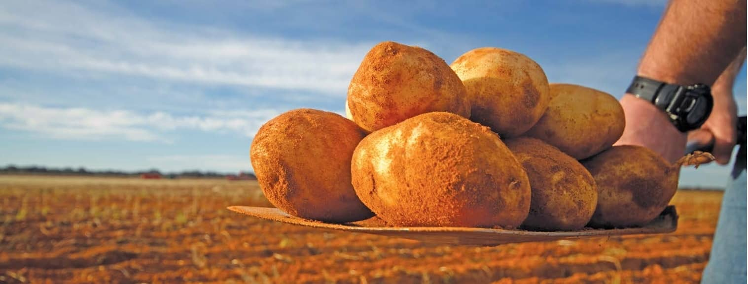 Once-In-A-Lifetime Potato Planning