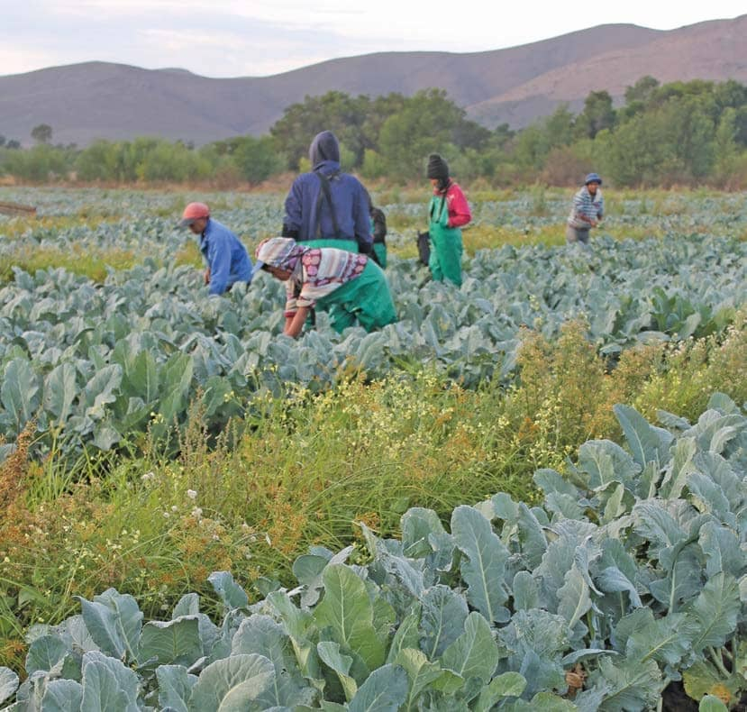 New Agri Development Agency Aims To Speed Up Land Reform