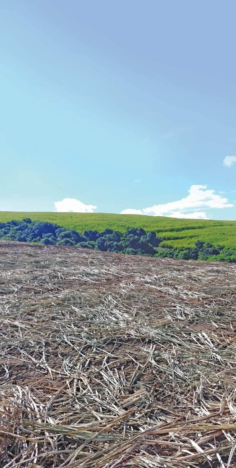 Shifting paradigms to make SA sugar cane farming more sustainable