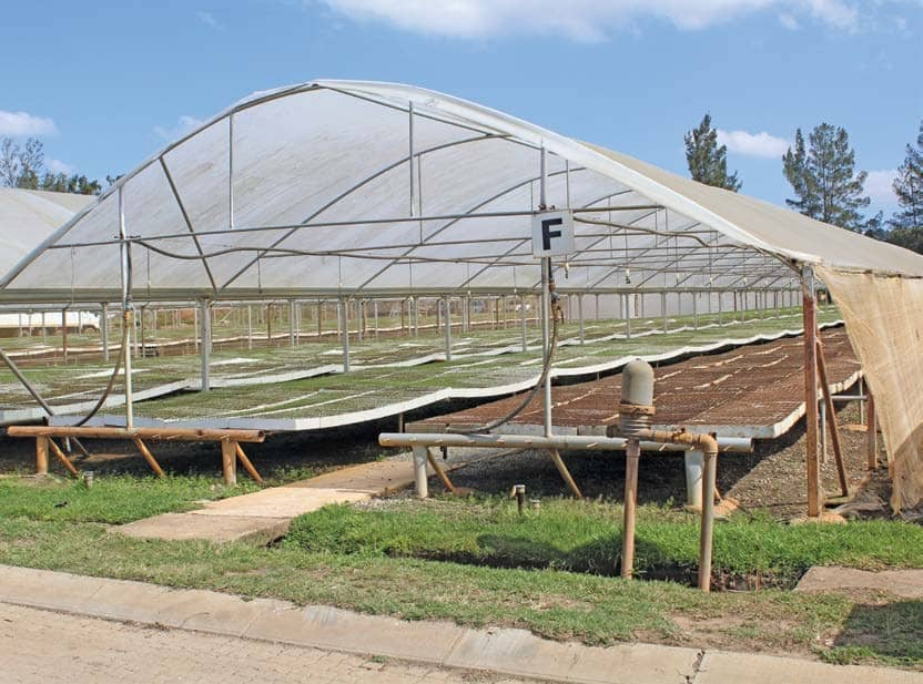 Undercover farming: big investment, greater returns