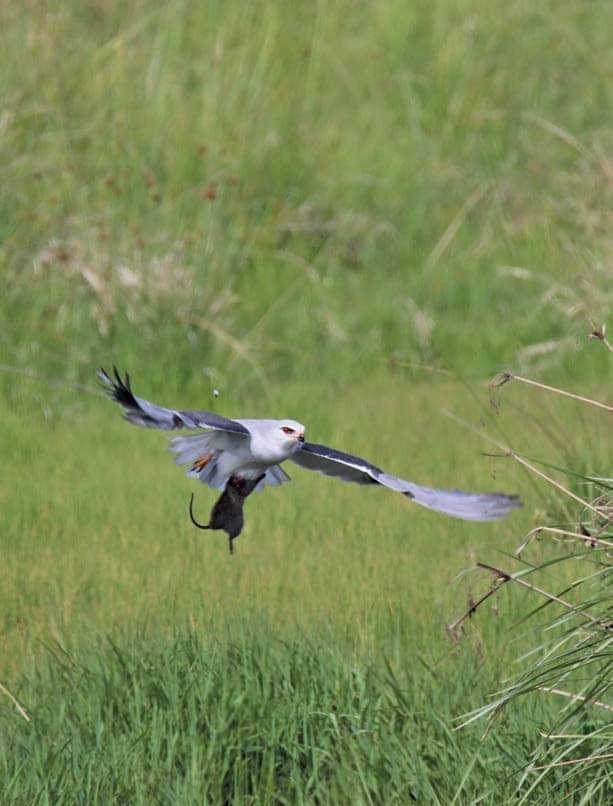 Birdwatching On Your Farm: A Lucrative Way To Generate Income