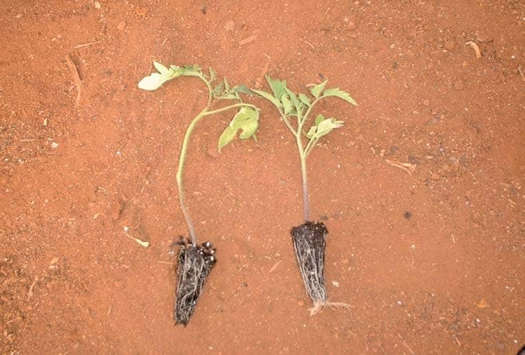 Seedlings: Well Begun Is Half Done!