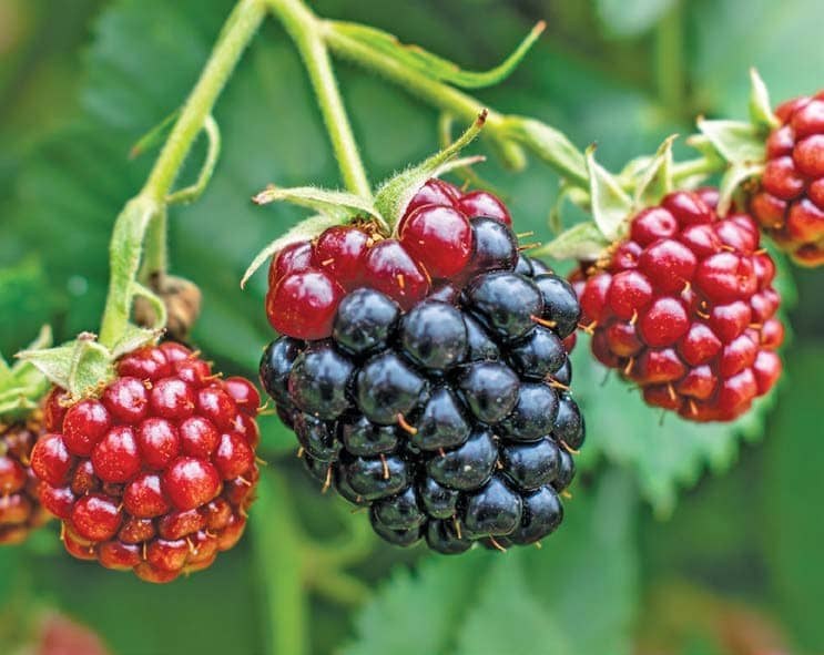 Add Value To Berries: Part 1