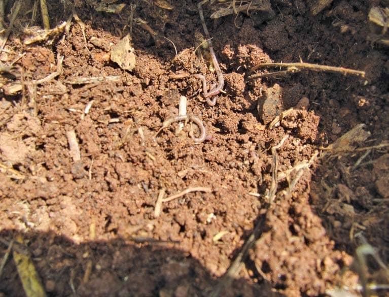 No-till: better soil at less cost