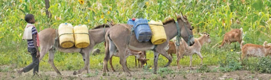 A Vicious Circle Of Poverty - The Scourge Of Child Labour In Agriculture