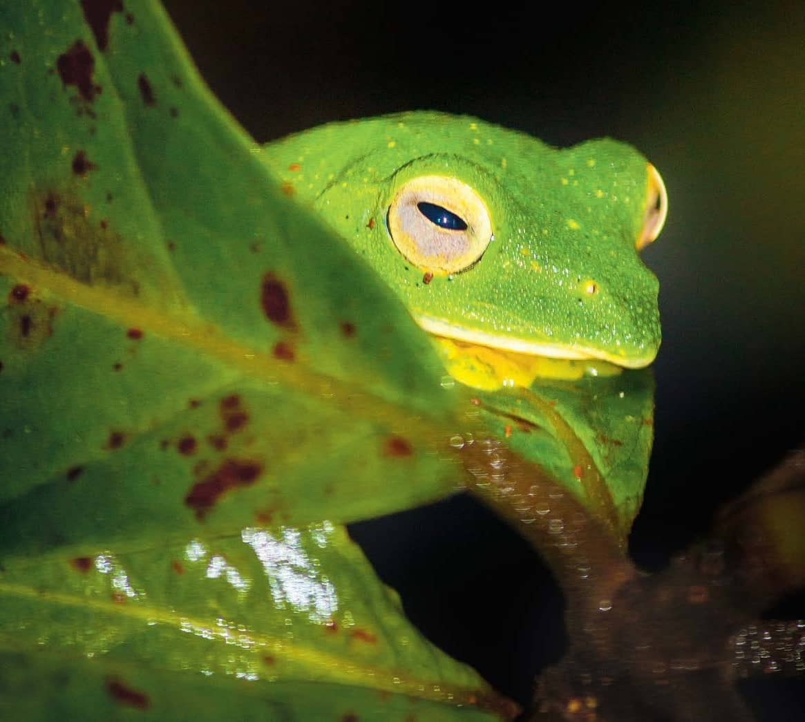 Watch The Frogs Come Out To Play In Amboli, Maharashtra