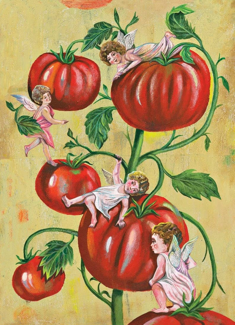 Tomatoes to the rescue