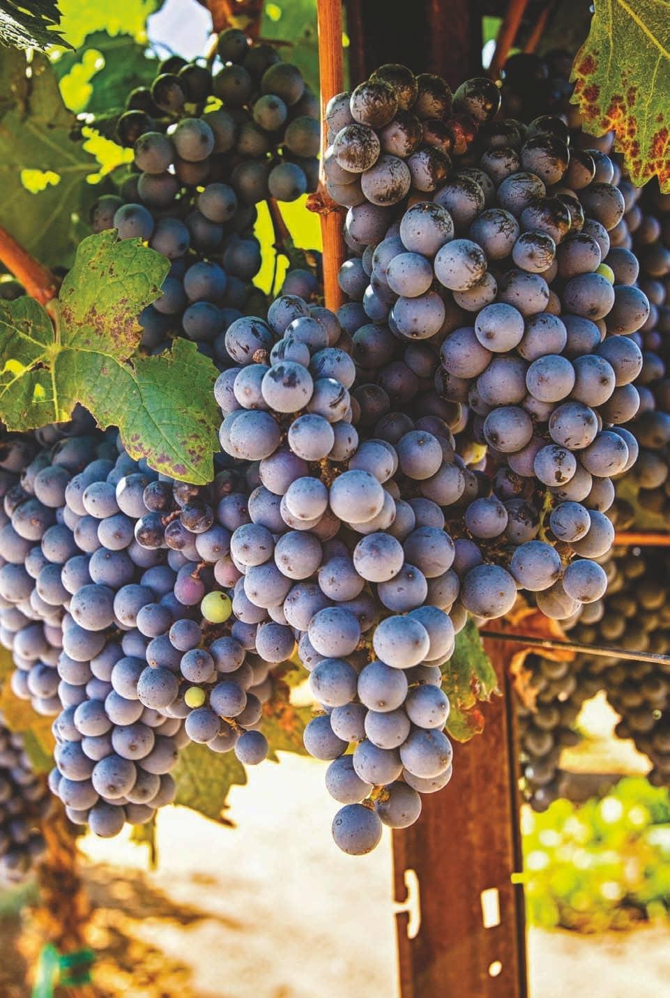 Southern Arizona Wineries