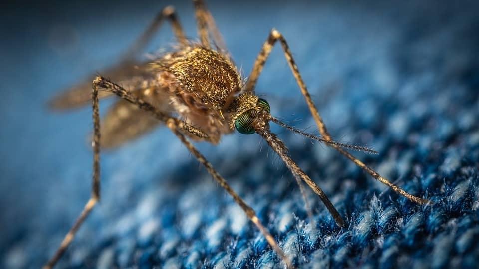 Breakthrough in Zika virus vaccine