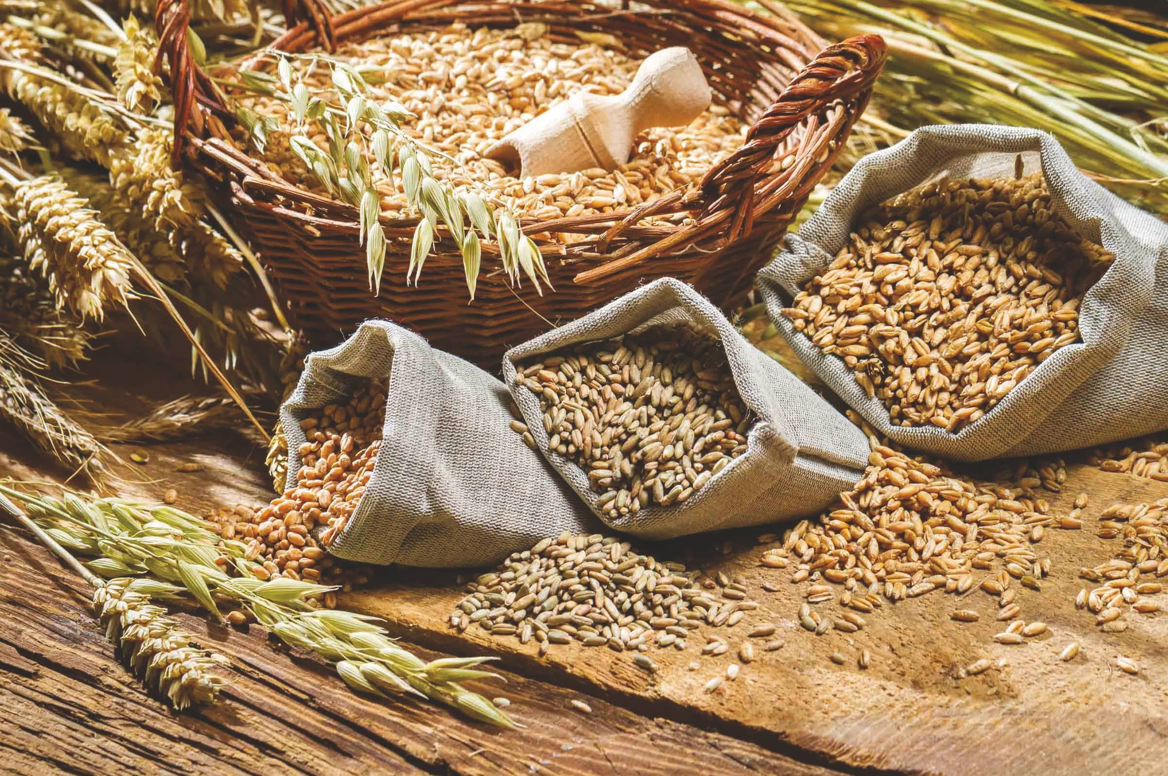 Grain Processing – Seed To Food