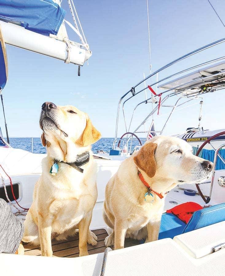 How To Take Pets Sailing