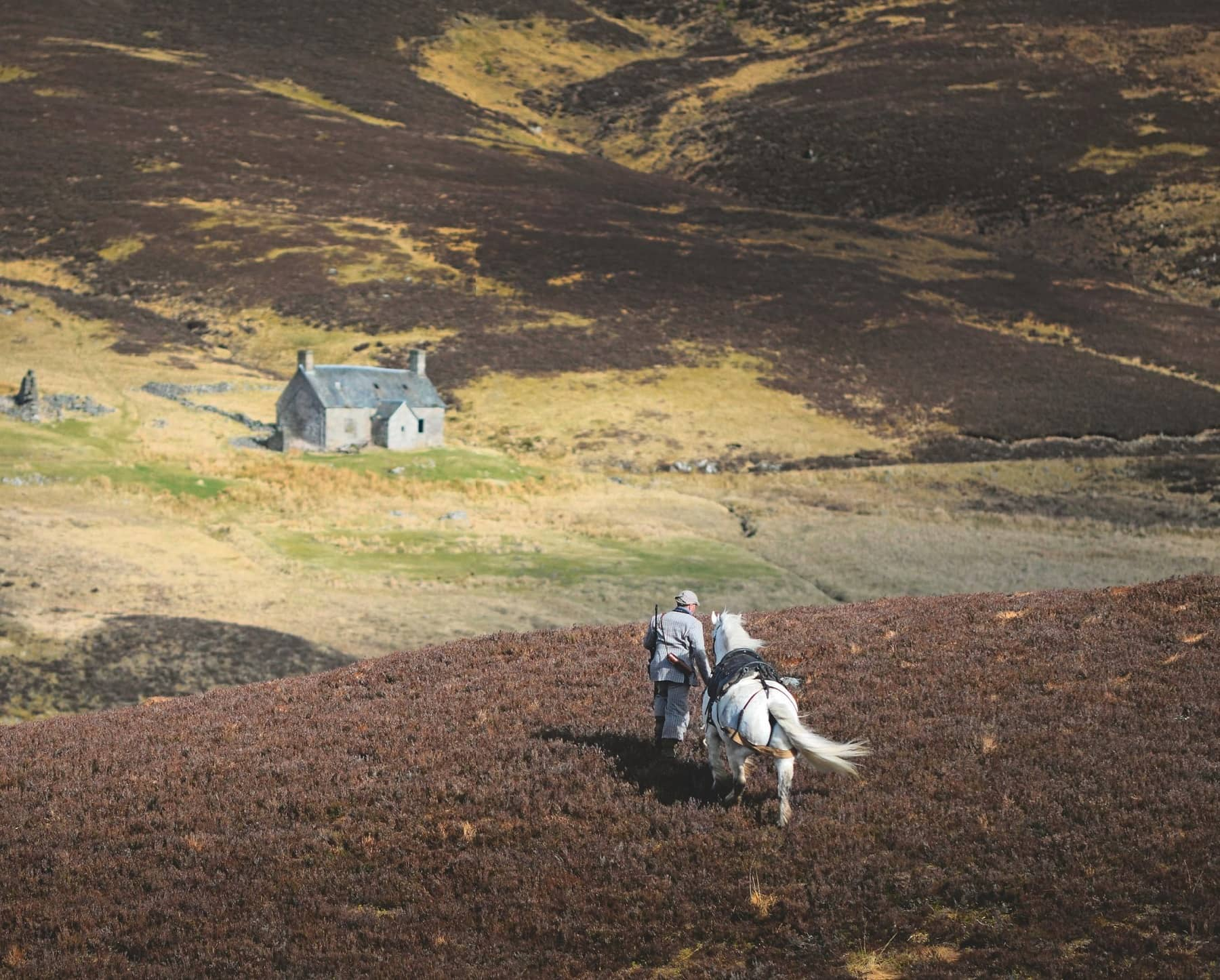 On The Hoof In The Highlands