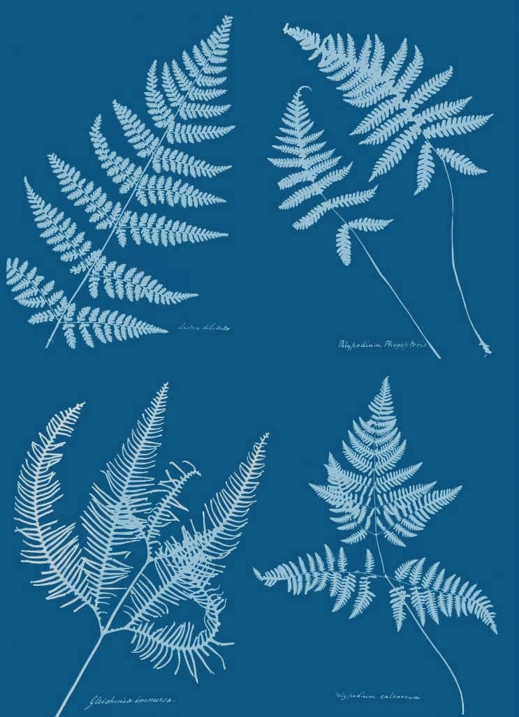 A blueprint for Nature