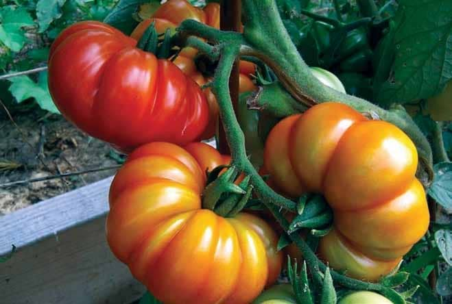 Why Heirloom Tomatoes Are Trending