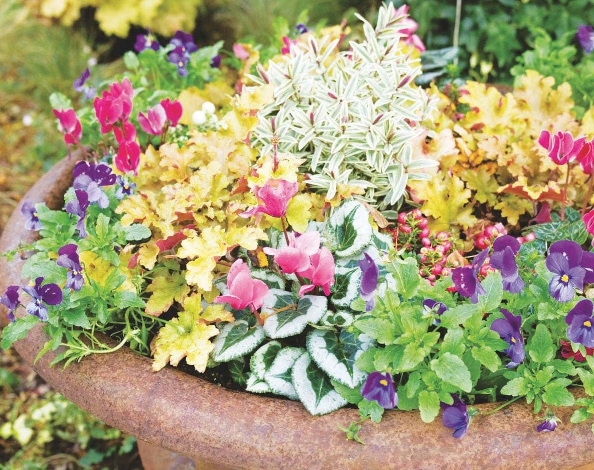 Big Impact, Small Space Winter Containers