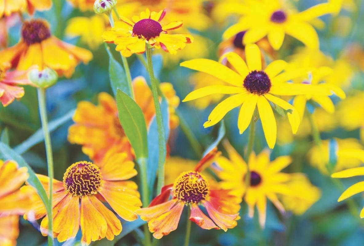 What to plant now for a Late-summer spectacular