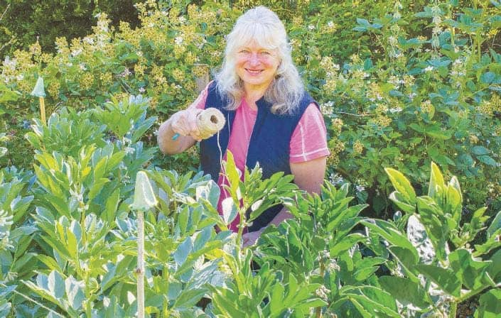 How do I protect broad beans?