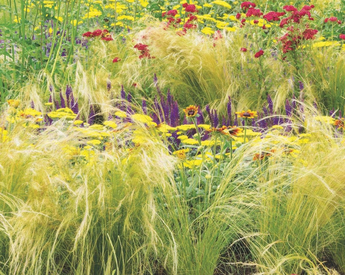 How to master Prairie-style planting
