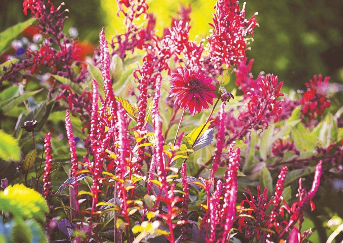 Reignite late-summer borders with Smouldering colours