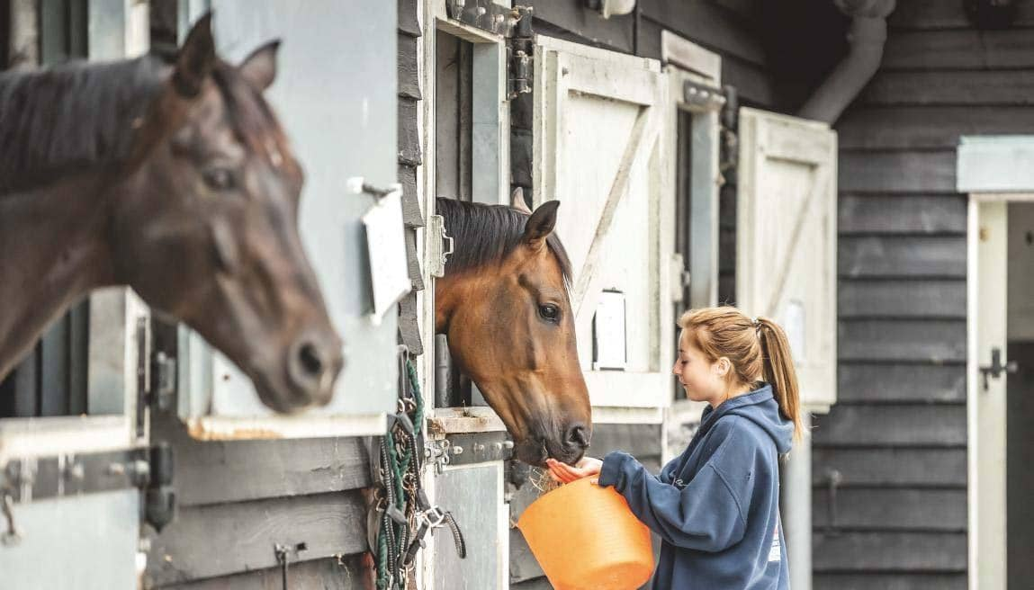 Penalties for flouting employment law are huge, equestrian employers are warned