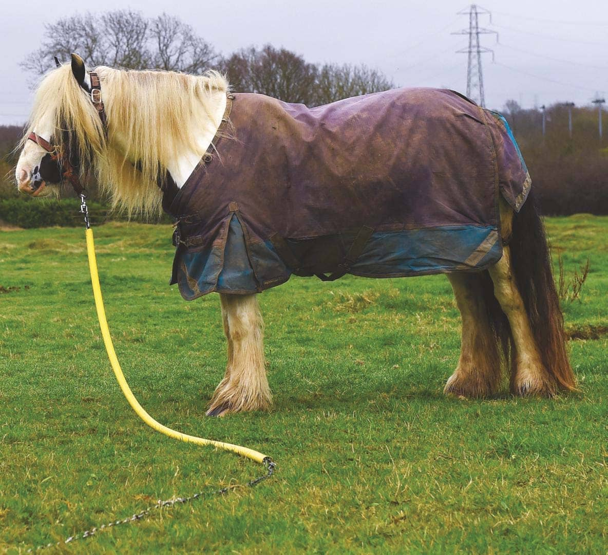 Could you rehome a rescue horse?