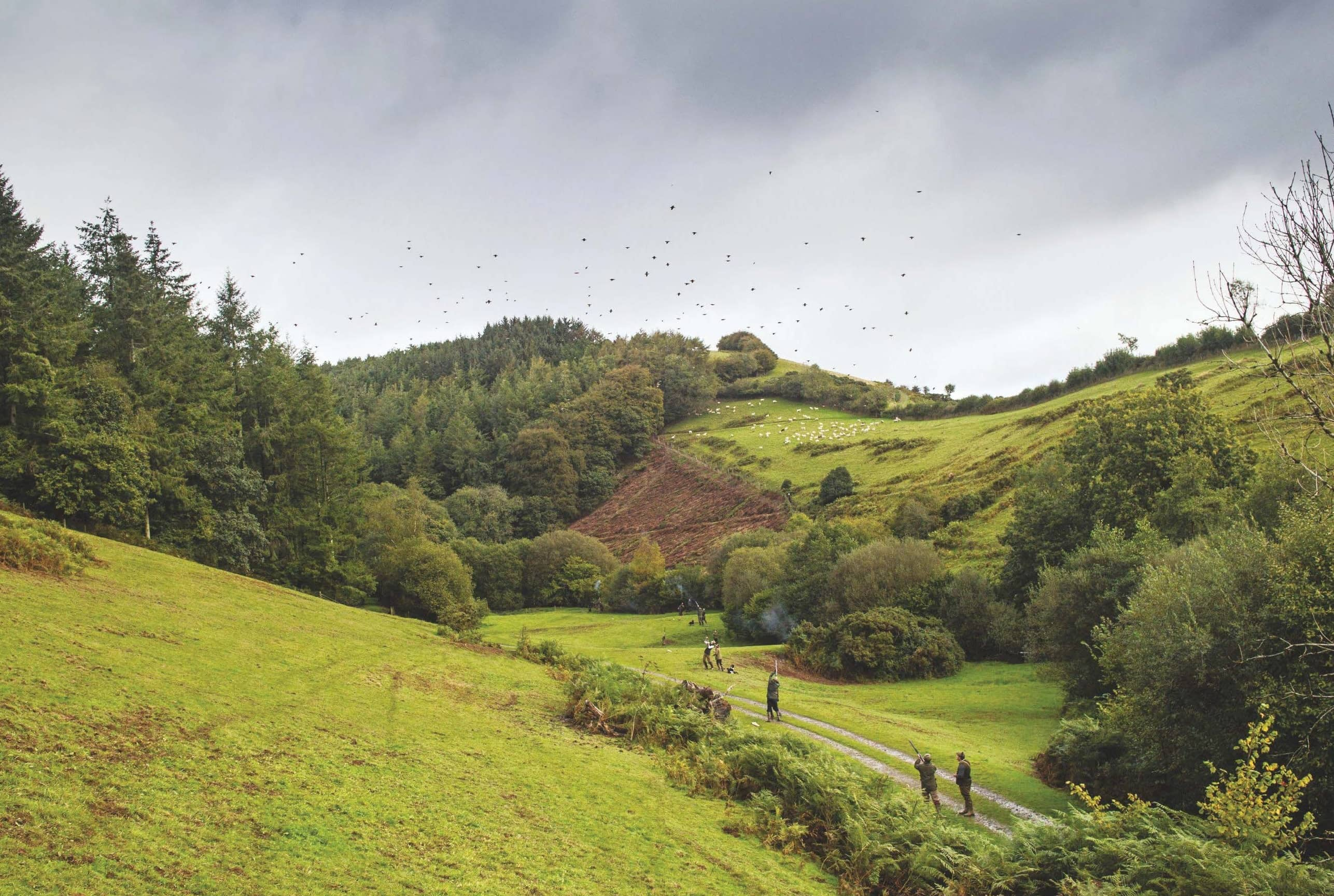 A dazzling partridge day on Exmoor