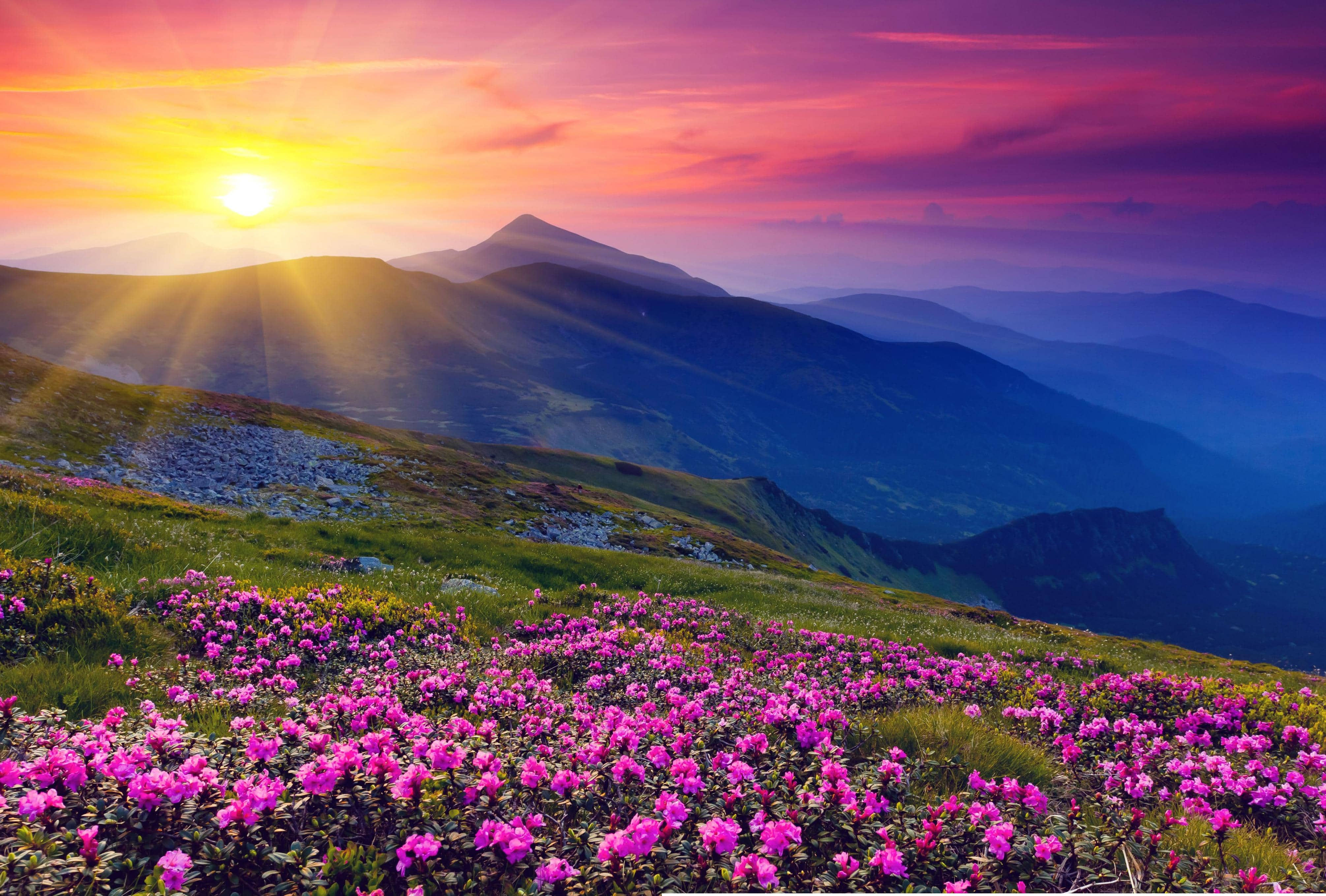 15 TECHNIQUES FOR GREAT SUMMER LANDSCAPES