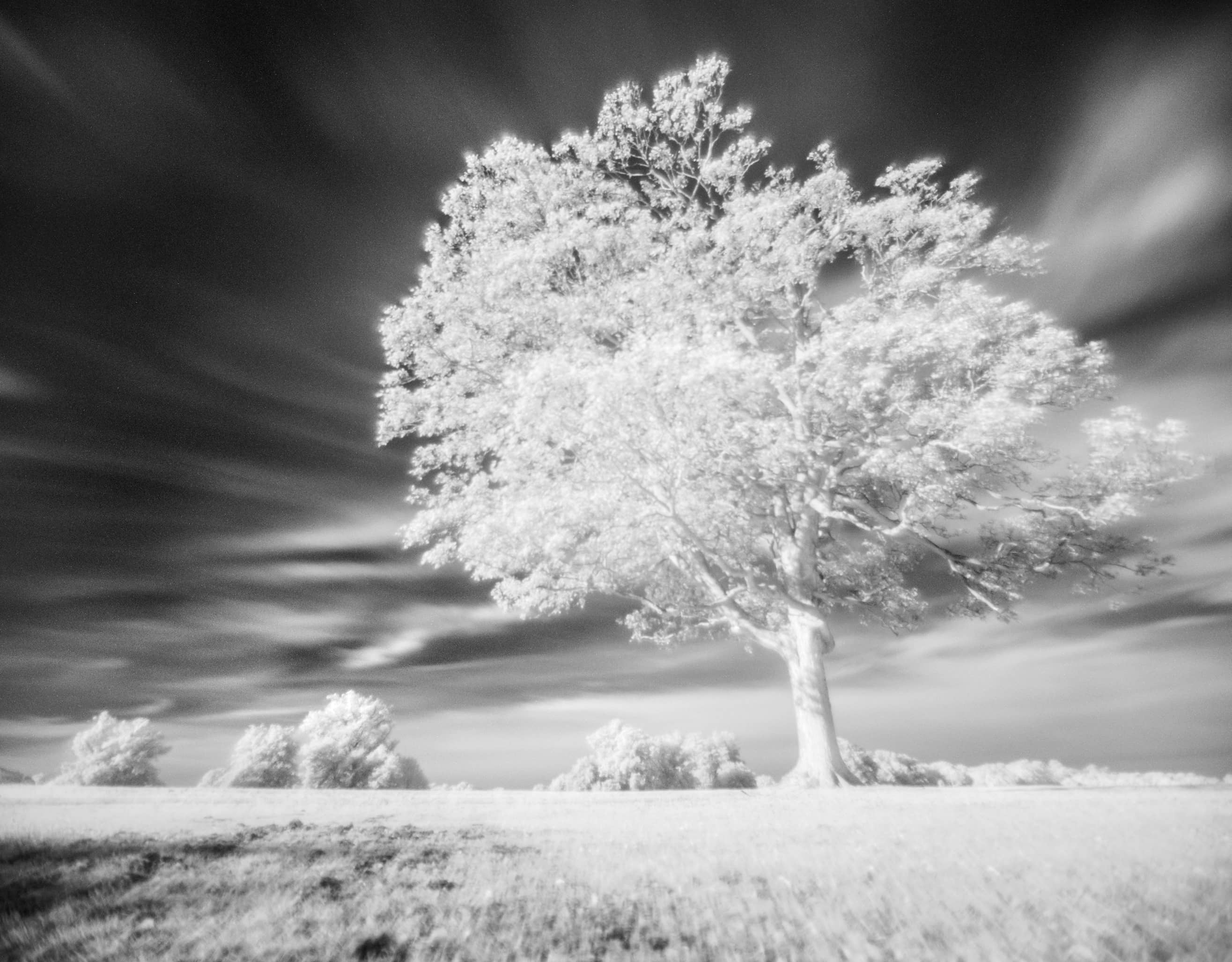 Take infrared photos on a tight budget